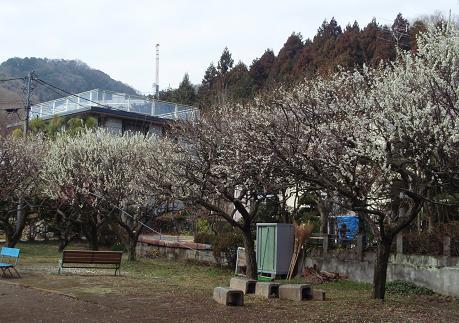 関所梅林3