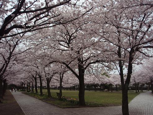宝野公園1