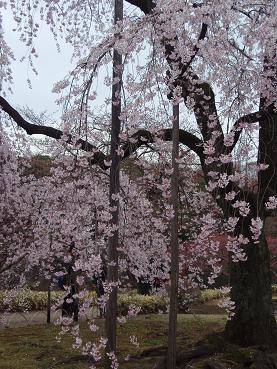 花見弁当11-4