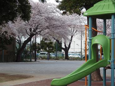 鬼太郎の桜3
