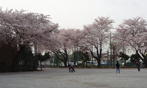 鬼太郎の桜2
