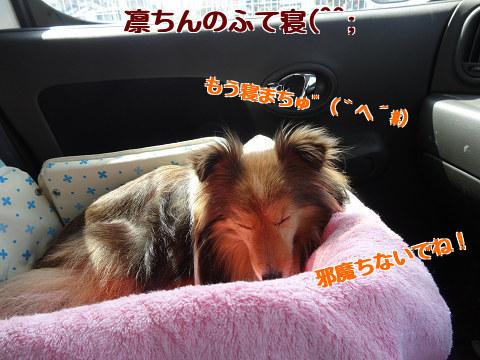 凛ちんのふて寝(^^;