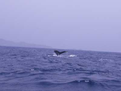 クジラ尾びれブログ用