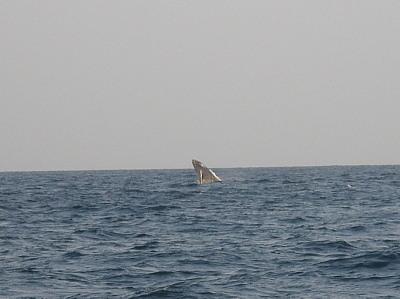 子クジラジャンプ