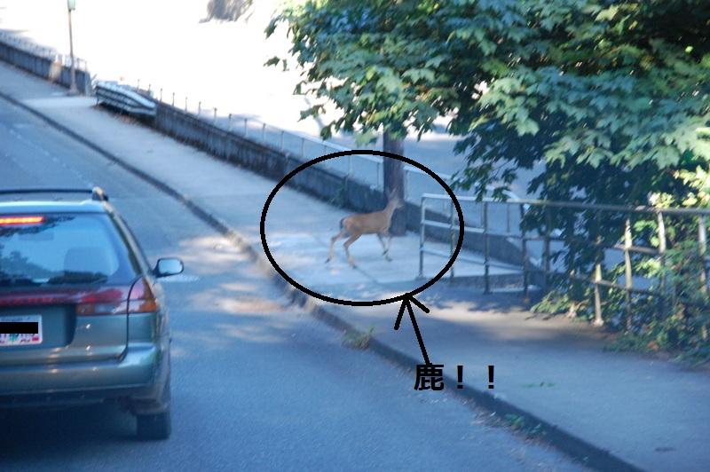 2011-08-03 deer