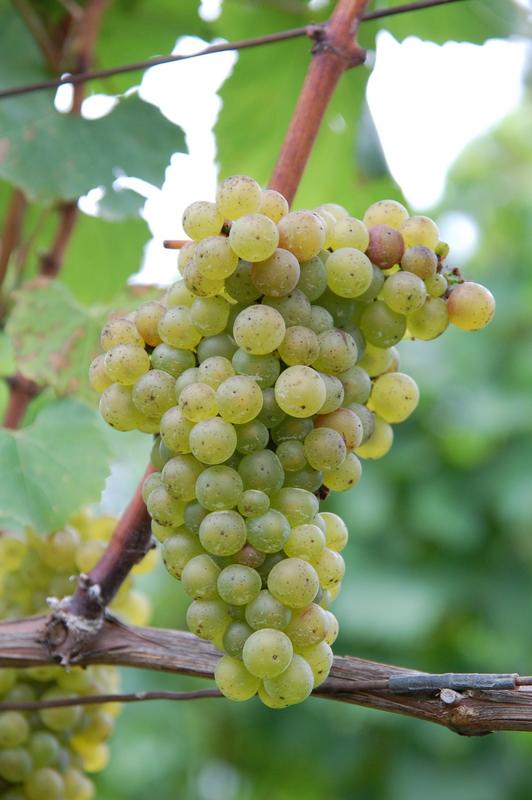 2011-11-14 wine (5)