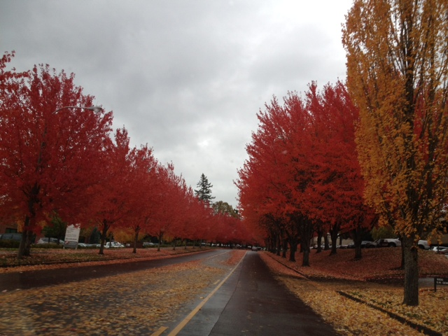 2011-11-17 mae