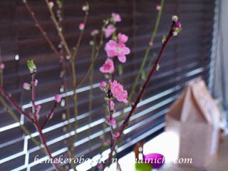 flower2013-2-18.jpg