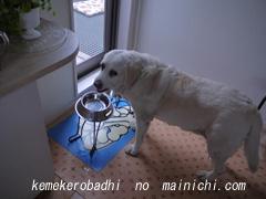 kemel2011-6.jpg
