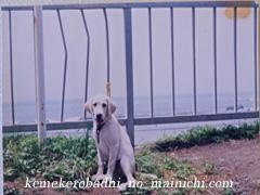 kemel2011-8.jpg