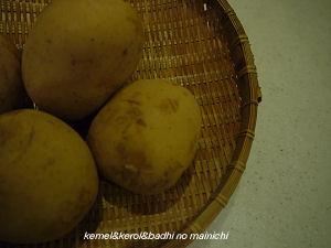 potato04.jpg