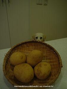 potato05.jpg