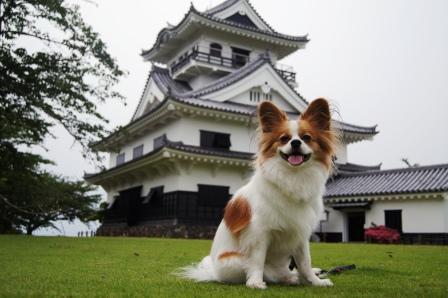 館山城をバックに