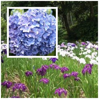 城山公園のお花