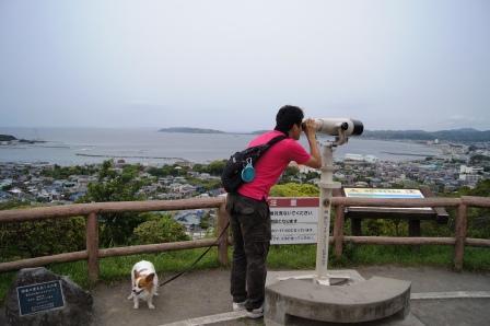 館山城でウォッチング