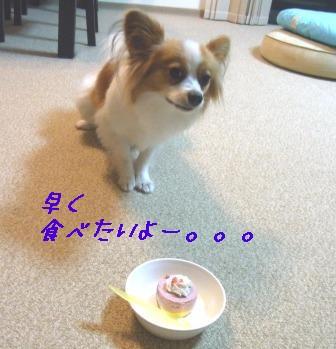 早く食べたいよー。。。