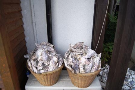 牡蠣の殻いっぱい!