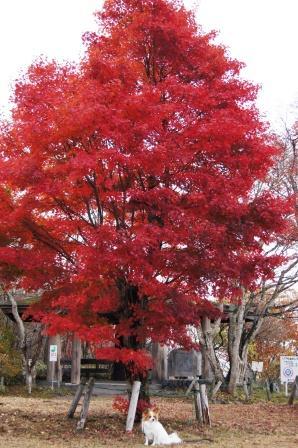 見晴らし台の紅葉