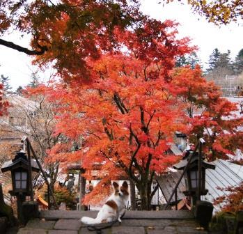 熊野神社③