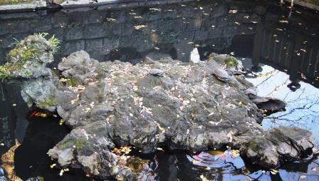 亀onカメ
