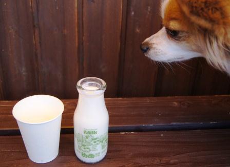 ゆめ牧場牛乳