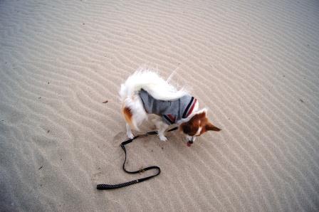 砂を食べるな><