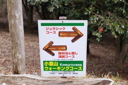 森林浴コース
