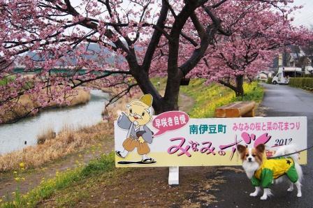 南伊豆の桜②