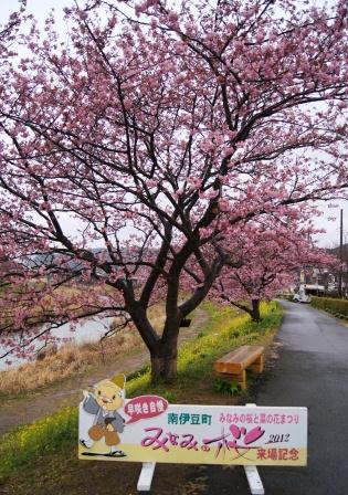 南伊豆の桜①