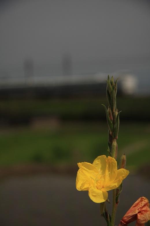 近江高島、2