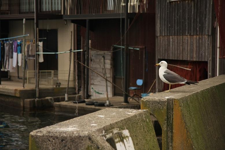 伊根漁港、8