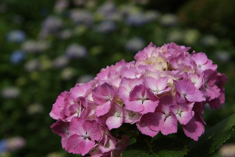 柳生花しょうぶ園、4