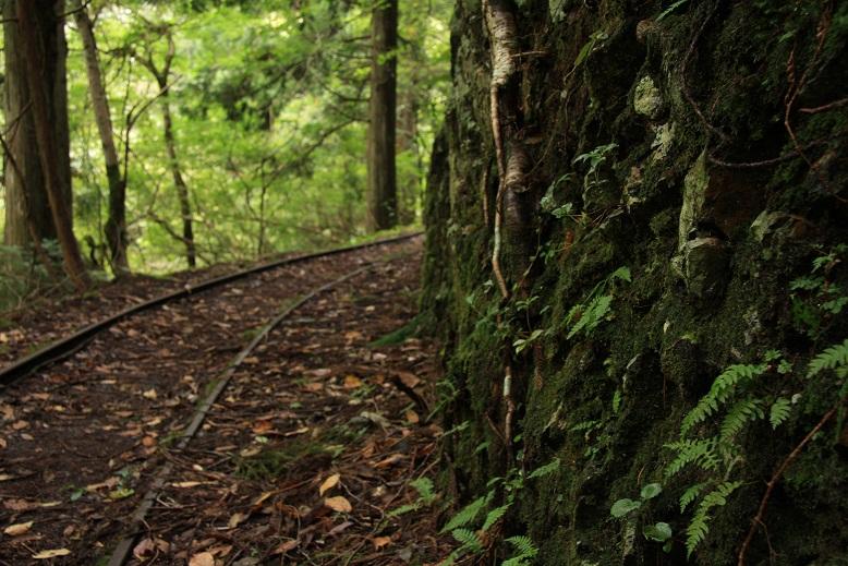 芦生原生林、5