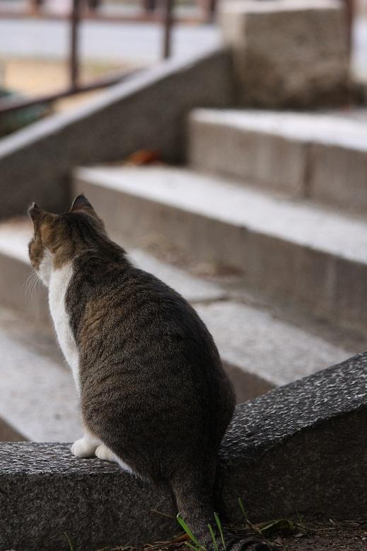 背中で人生を語る猫