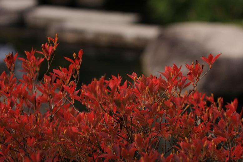 百済寺、8