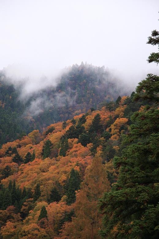 芦生の森、1