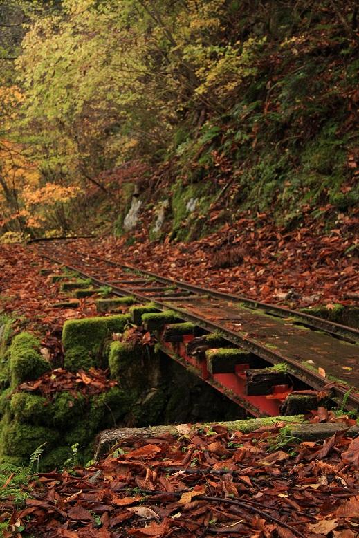芦生の森、5