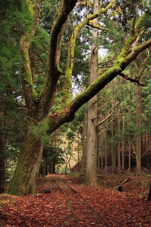 芦生の森、7
