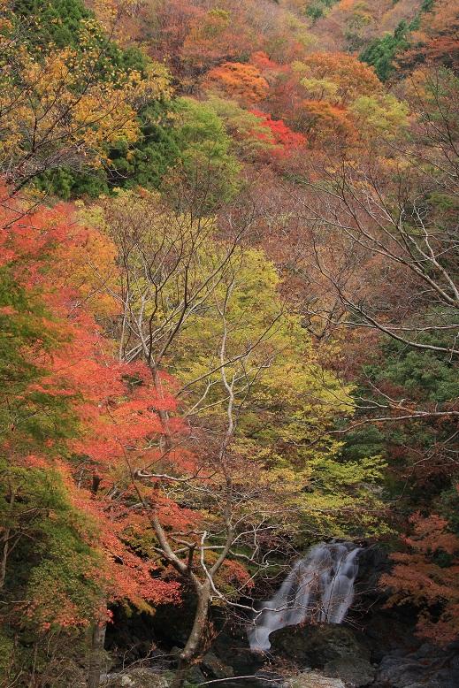 大又川 魚止滝、1