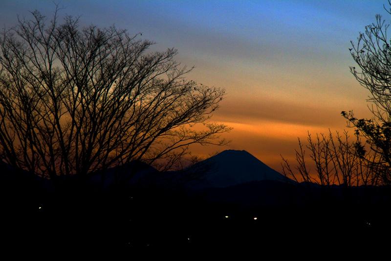 昭和記念公園から望む富士山