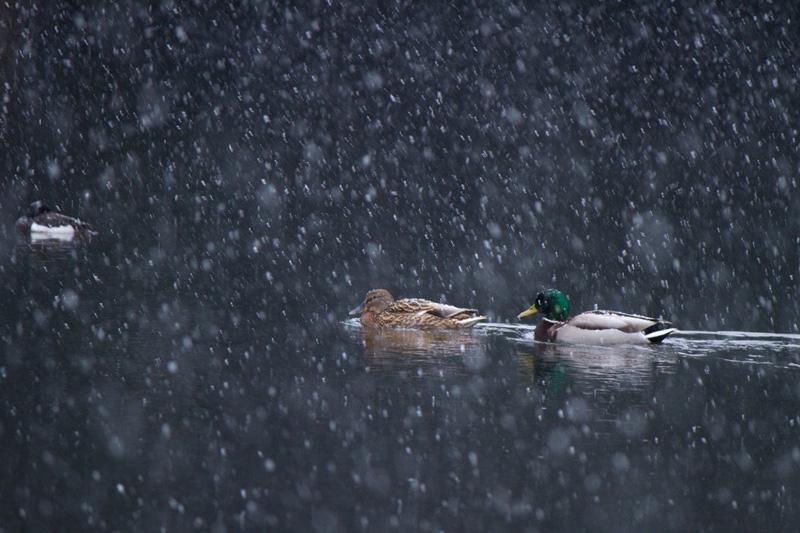 雪の舞い散る中で