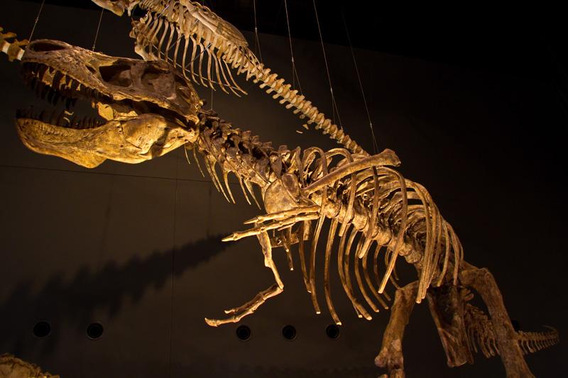 ティラノザウルス
