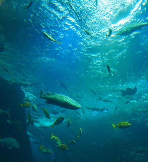 江の島水族館①