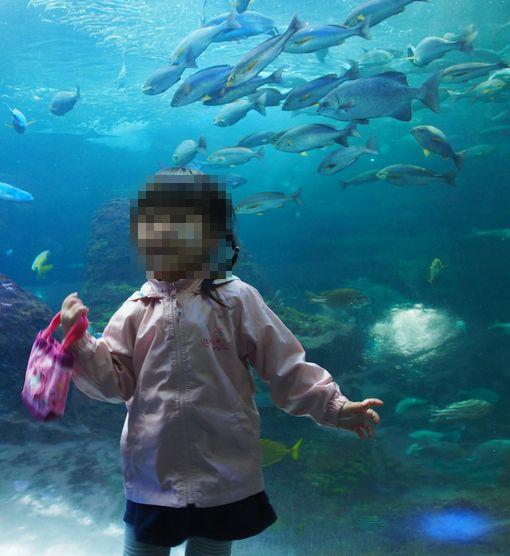 江の島水族館②