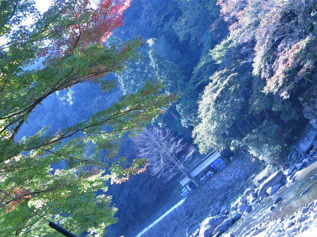 香嵐渓 2009年