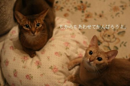 tomodachi110315 1