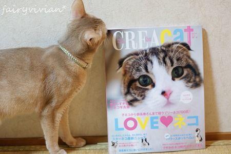 CREA CAT 110413 1