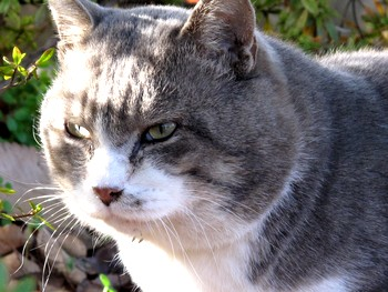 思い出の広場にいた猫