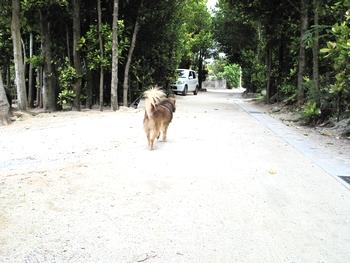 備瀬のフク木並木の案内犬?
