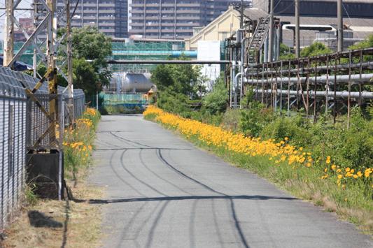 10-5-16宮浦ウウヤ様子 (27) のコピー